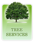 tree-services-tab.jpg, 21 kB